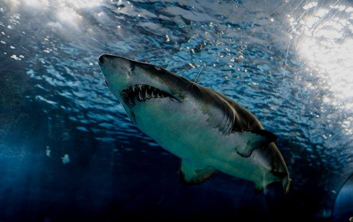 映画『ジョーズ/JAWS』シリーズを動画配信サービスで無料視聴するなら…