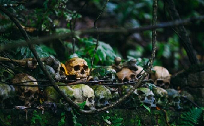 森と頭蓋骨