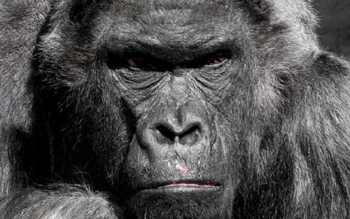 映画『猿の惑星』シリーズを動画配信サービスで無料視聴するなら…