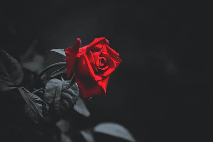 ドラマ『牡丹と薔薇』を無料で観られるおすすめ動画配信サービス